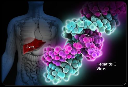 06in_hepatatis_2921948f