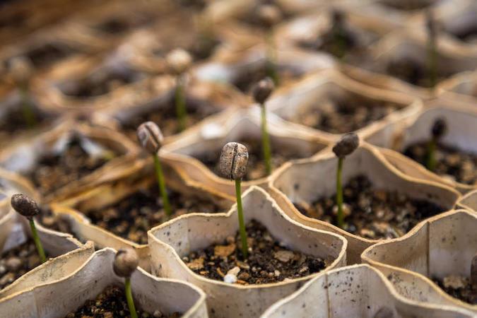 seedsharingbill
